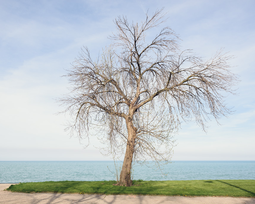 Springtime in Edgewater - Chicago, Illinois 2017 - Nature Photography by Michael Courier
