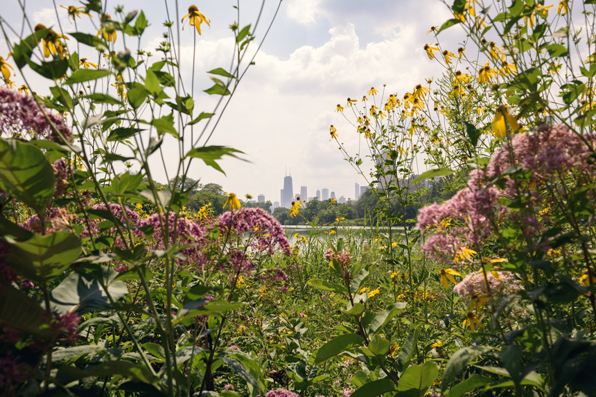 Flowery Chicago Skyline landscape by Michael Courier Photography