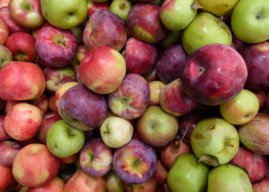 Making apple cider at Red Fire Farm is Granby, Massachusetts - Photos by Michael Courier